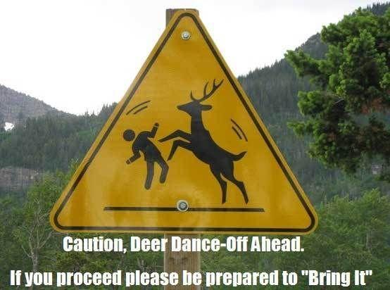 deer funny