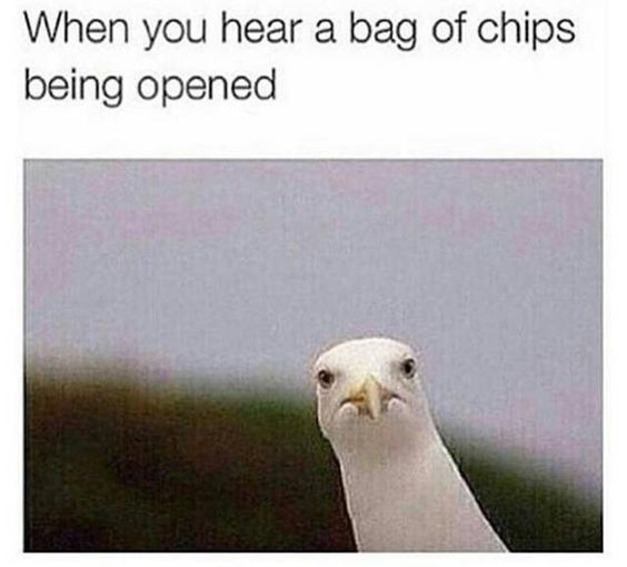 funny-chips