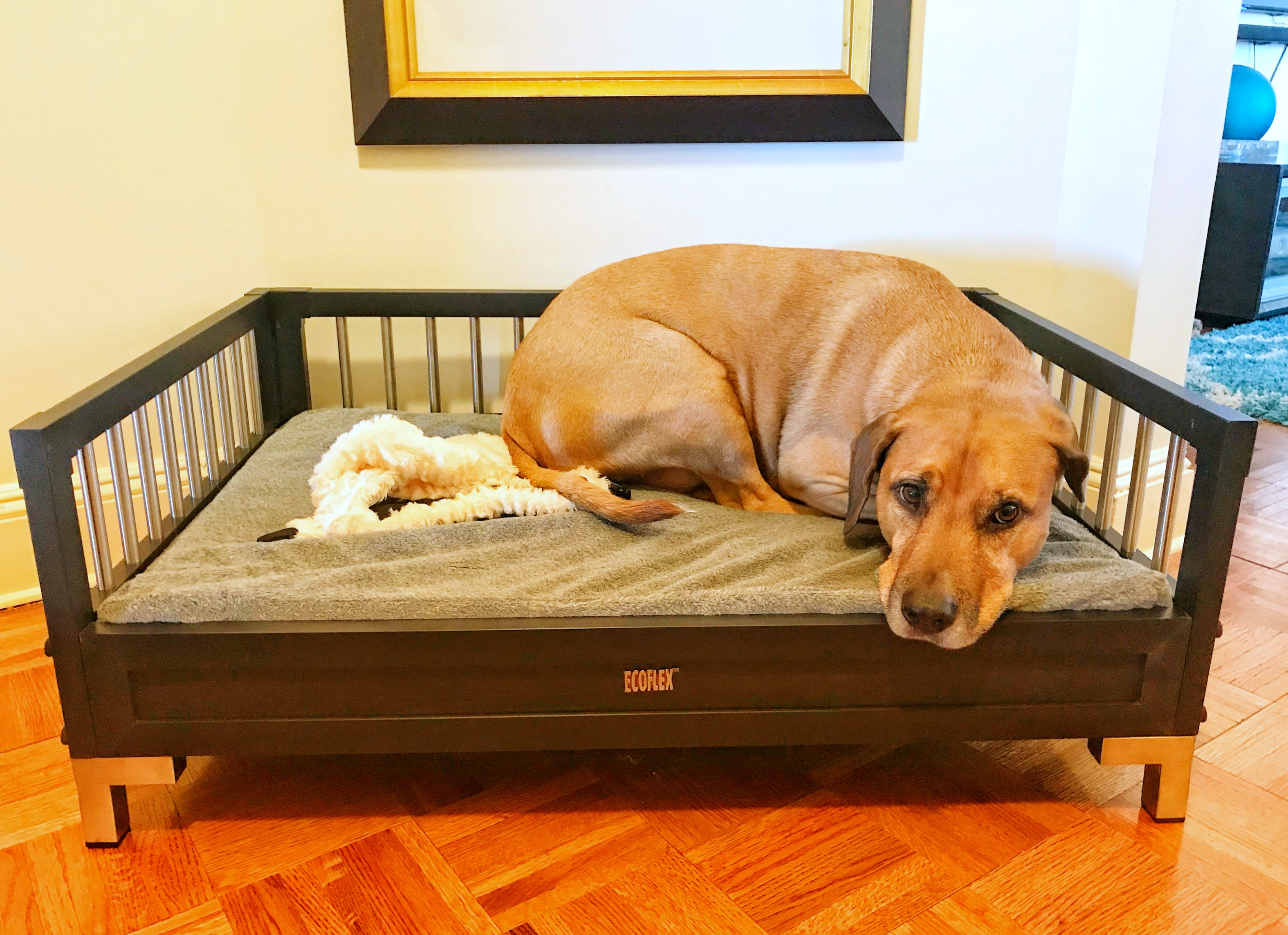 ecoflex dog bed manhattan