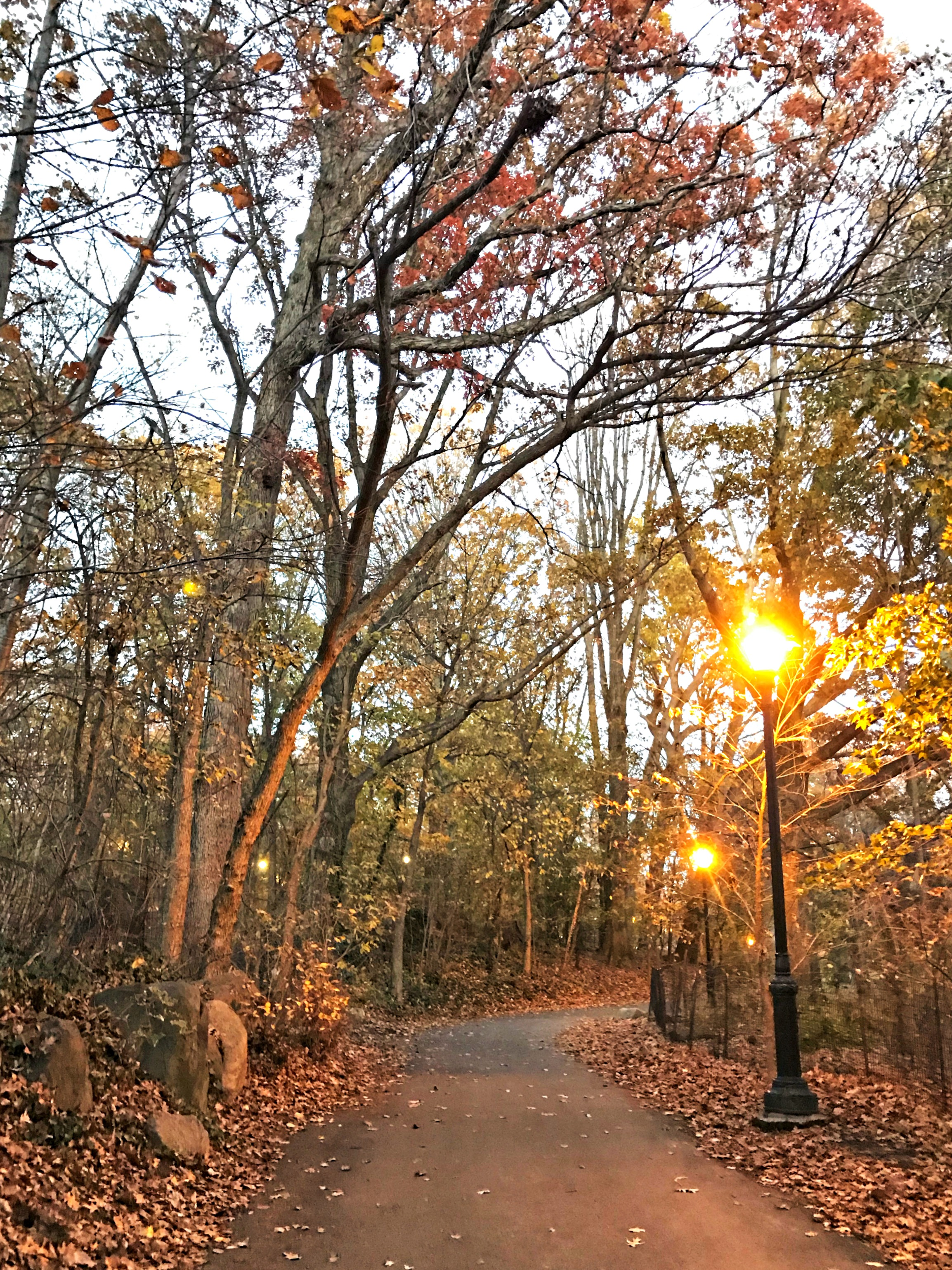 prospect park at sunset park slope