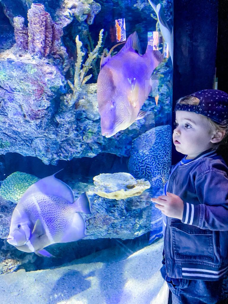 houston zoo aquarium
