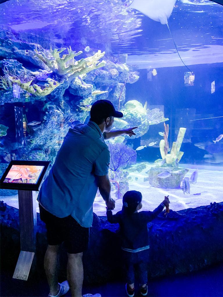 houston zoo aquarium fish