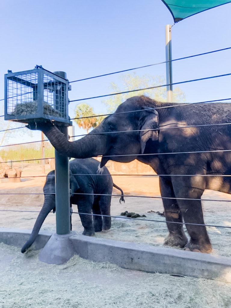 houston zoo elephants