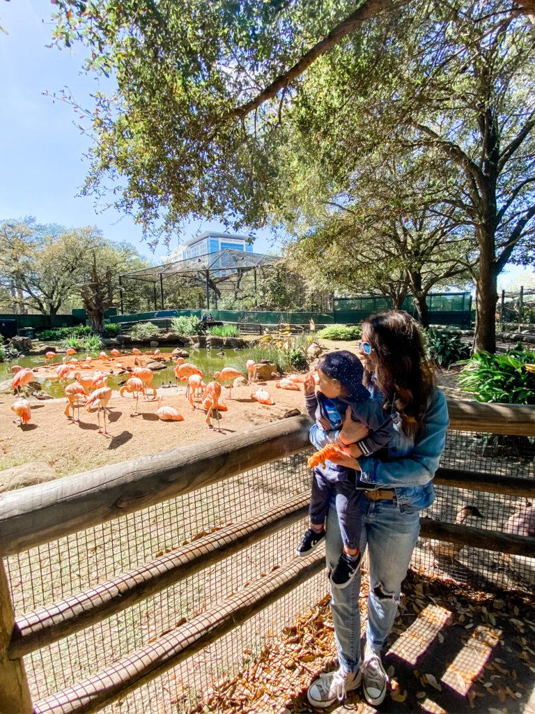 skyler heather flamingos