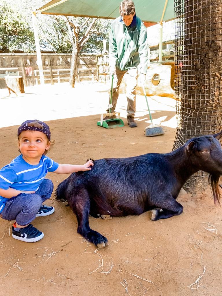 skyler petting the goat