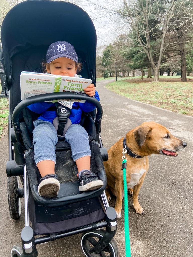 stroller walk with skyler and roadie