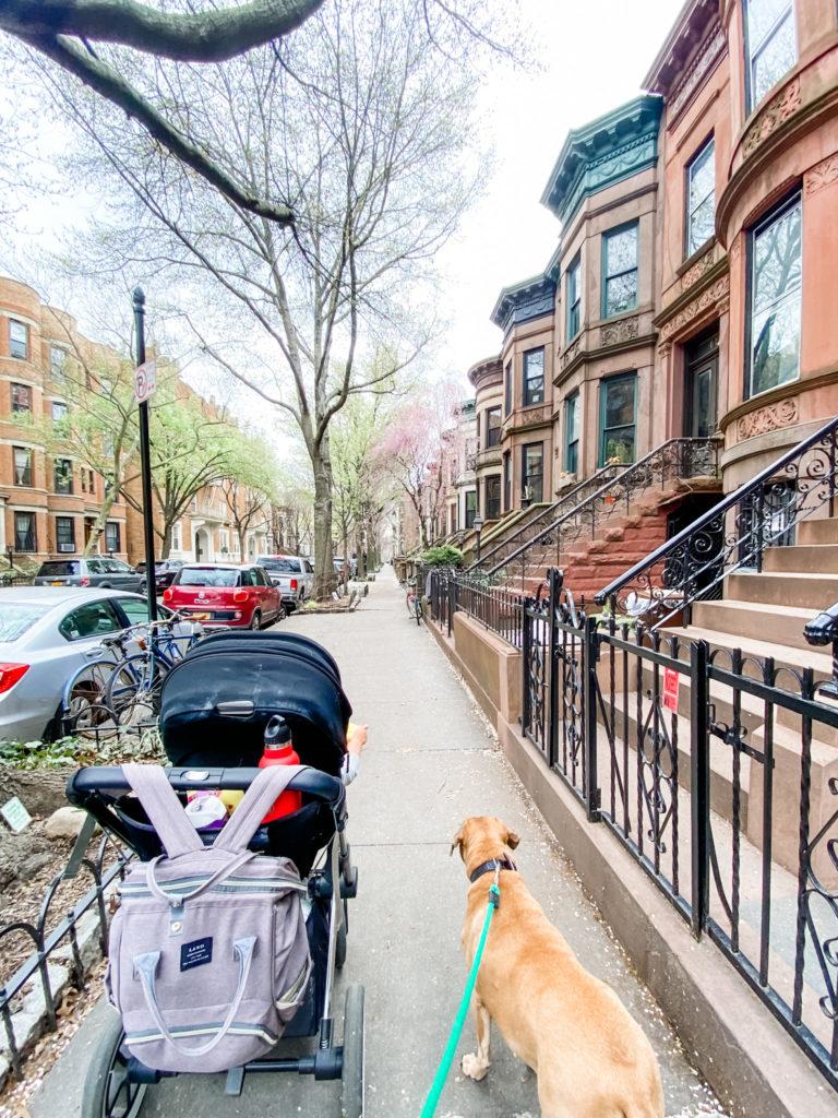 park slope neighborhood walk with skyler and roadie