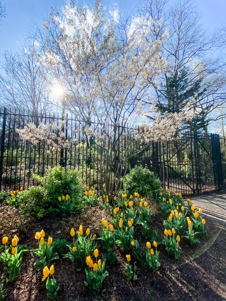 prospect park easter lilies
