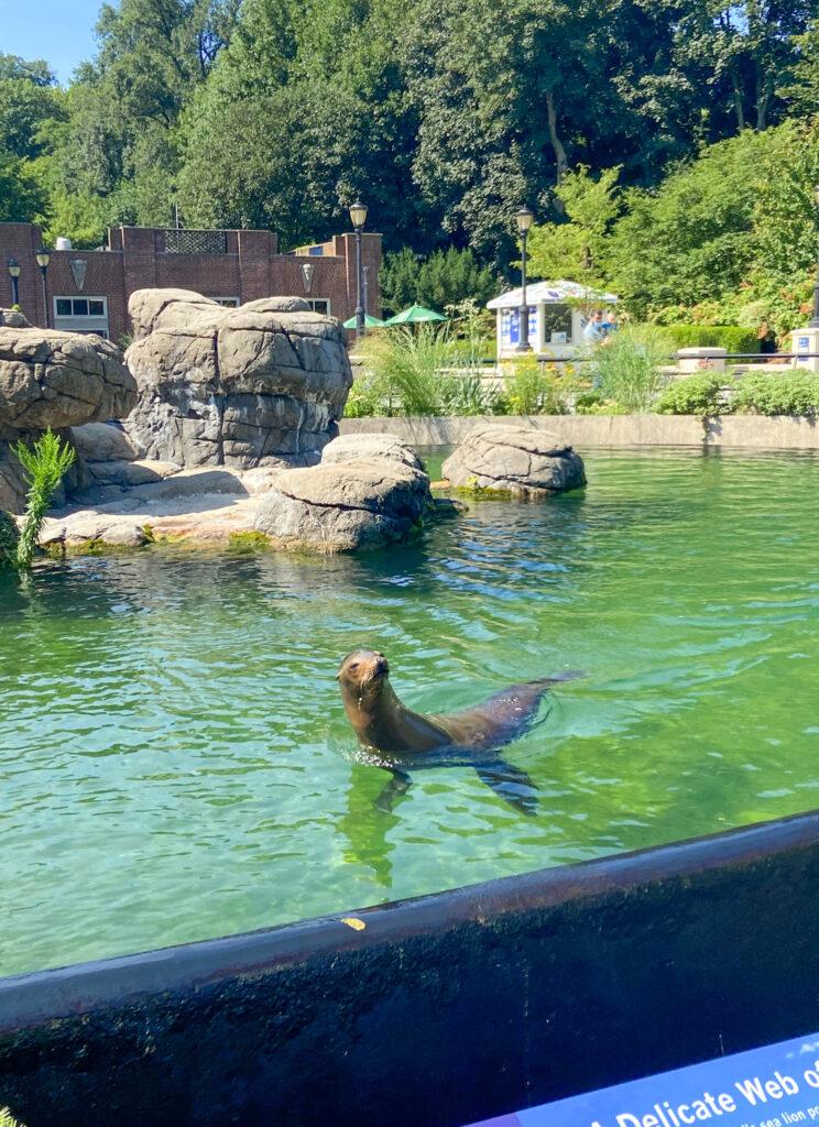 prospect park zoo sea lions