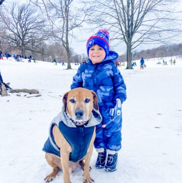 Skyler and Roadie in the snow - Prospect Park