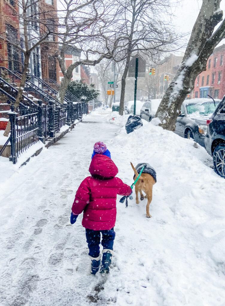 Skyler walking Roadie winter 2021