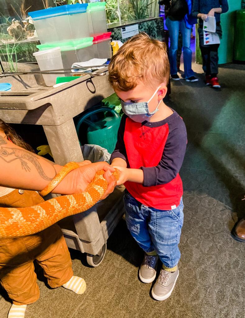 Reptiles at Brooklyn Children's Museum