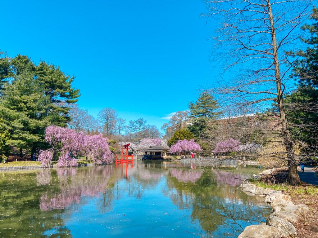 Brooklyn Botanic Garden Spring 2021