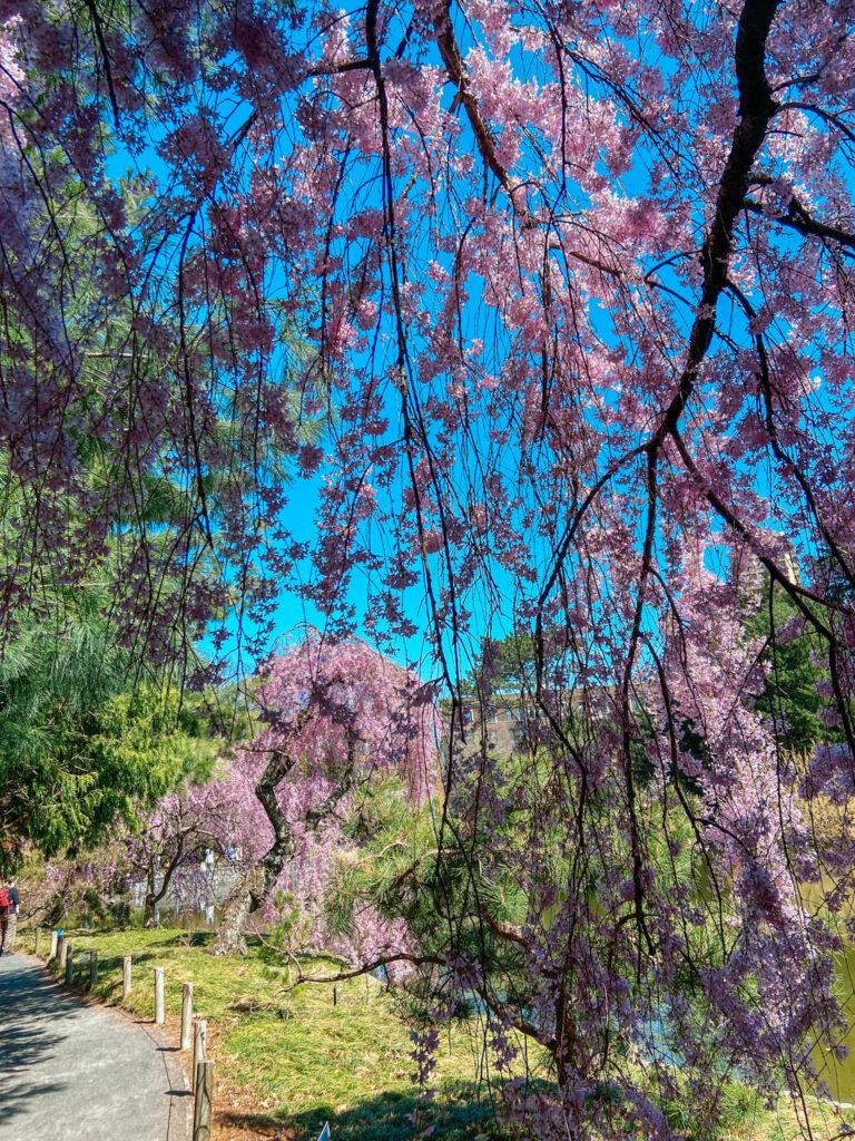 Brooklyn Botanic Garden flowers