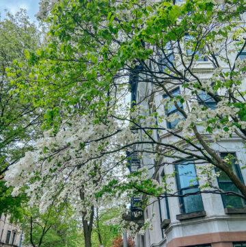 spring in park slope brooklyn